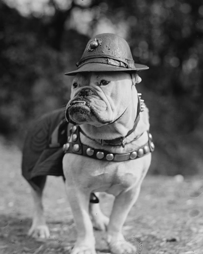 Sgt. Maj. Jiggs